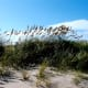 Sea Oats protecting the sand dunes,  Cape Hatteras National Seashore, NC Outer Banks