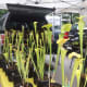 Carnivorous pitcher plants for sale