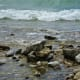 Rocky shoreline on Mackinac Island