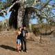 This Imbondeiro tree in Kissama is huge!  Here's the author and her boyfriend underneath it