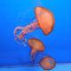 Jellyfish in natural lighting
