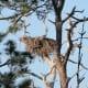 Eagle Nest on Honeymoon Island