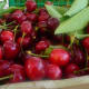 Cherries are popular fruit trees to grow, as are figs, oranges, lemons and apples, to name a few.