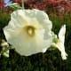 the-ubc-botanical-garden-in-vancouver-british-columbia