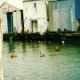 Pelicans in Galveston Waters