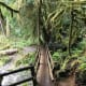 Marymere Falls Trail at Olympic National Park near Seattle, Washington