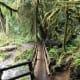 Marymere Falls Trail at Olympic National Park near Seattle, Washington