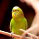 Colorful bird at the Cheyenne Mountain Zoo in Colorado Springs, Colorado