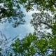 Houston Arboretum sky scenery