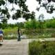 Walking through a wetlands area