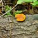 Colorful Mushroom growing on a log