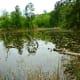 Wetlands areas at the Houston Arboretum