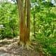 Base of a crape myrtle tree