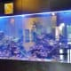Large 2,000 gallon saltwater aquarium