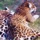 Houston zoo photo