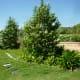 Mandell Park