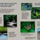 seabourne-creek-nature-park-peaceful-haven-in-rosenberg-tx