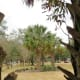 Paseo Park scenery