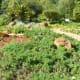 Natural Medicine Garden