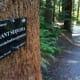 Hoyt Arboretum at Washington Park in Portland