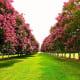 Crepe Myrtles at the Norfolk Botanical Gardens in Norfolk, VA