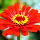 Beautiful red flower at the Norfolk Botanical Gardens in Norfolk, VA