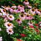 Flowers at the Norfolk Botanical Gardens in Norfolk, VA