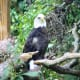 Bald Eagle at the Virginia Zoological Park in Norfolk, VA