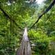 Mtirala National Park Walkway
