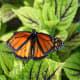 Butterfly at the Norfolk Botanical Gardens in Norfolk, VA
