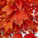 Fall Colors in Sugar House, Utah