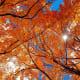 Orange Leaves in Liberty Park, Utah