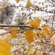 Fall Leaves in Fairmont Park, Utah