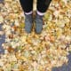 Fall Leaves in Sugar House, Utah