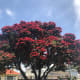 A Beautiful Pohutukawa Opposite Weta Cave