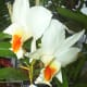 hidden-hawaii-the-spectacular-59th-annual-orchid-show-in-hilo-on-the-big-island