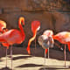 The San Antonio Zoo's Flamingo habitat is stunning. These gorgeous birds are just a few living there.