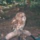 An owl at Busch Gardens circa 2010.