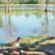 More ducks in Burroughs Park