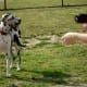 Dog Park in Goforth Park