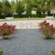 Pretty roses in the Felicie Babin Gucymard Memorial Garden