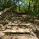 Edith L. Moore Sanctuary pathway