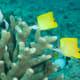 Forcepsfish - on the list