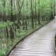 congaree-national-park