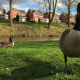 The waterfowl are friendly and curious. The views over the lake from the adjacent properties must be stunning.