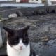 feral-cats-of-playa-blanca-lanzarote-part-four