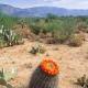 Barrel Cactus Squats