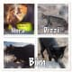 feral-cats-of-playa-blanca-lanzarote-part-two
