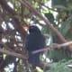 Blackbird with a Keen Eye
