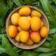 Beautiful, Ripe Orange and Yellow Mangoes
